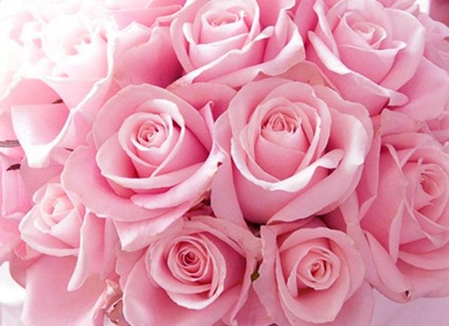 Meditazione cromatica pagina 2 di 3 il percorso dall for Rose color rosa antico