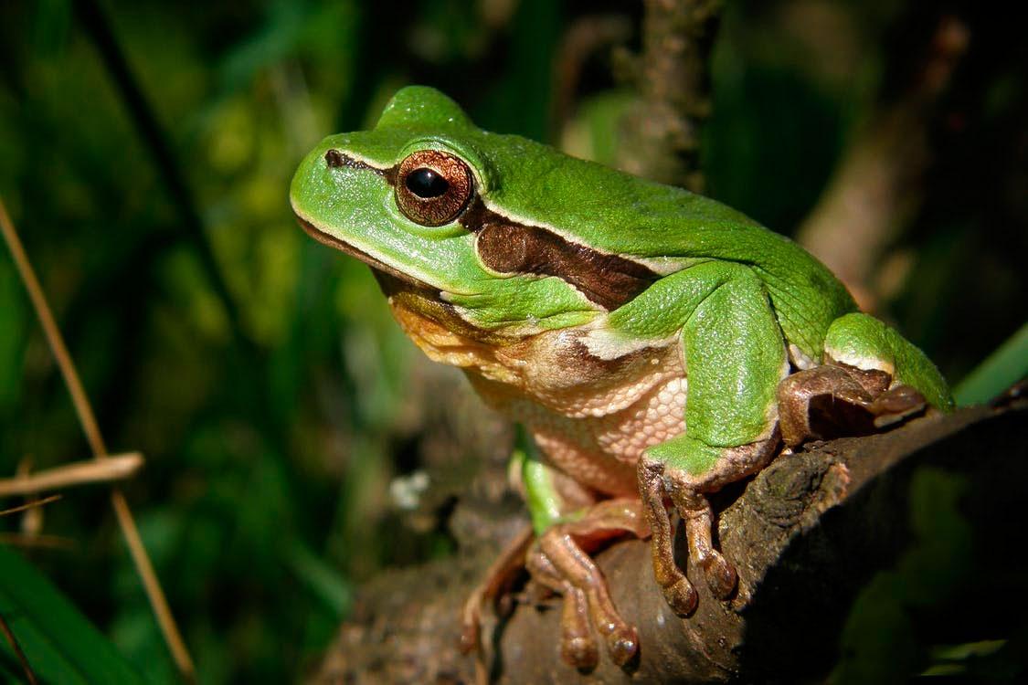 verde-rospo