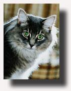 12_cat