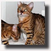 14_cats