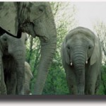 24_mamma_elefante
