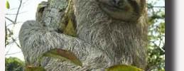 bradipook