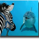 zebradelfinook