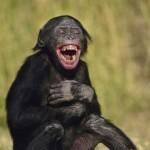 202-scimmia