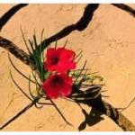63. IL GUERRIERO E LA RESURREZIONE