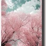 02_Trees
