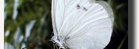 farfallaOK