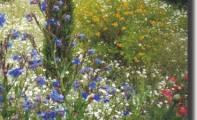 04art_fiori