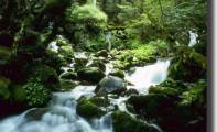 02art_fiume_alberi