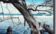 04art-albero-olistico