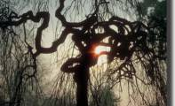 02art_luce_albero