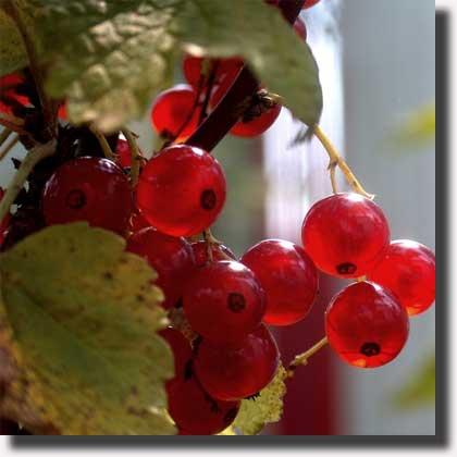 Il calendario della frutta e della vitalità