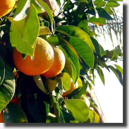 http://valdovaccaro.blogspot.it/2010/09/malattia-e-cura-nella-visuale.html