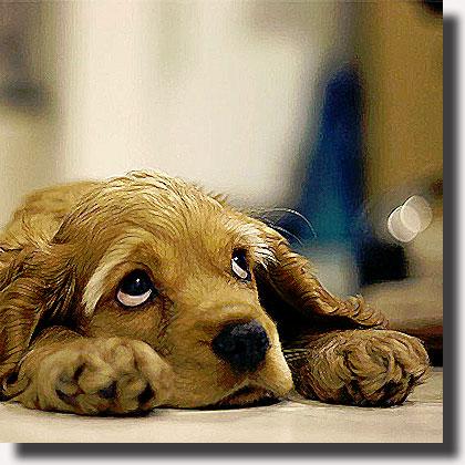 Padrona in ospedale: il cane può entrare