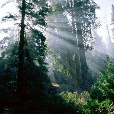 Foreste: in Italia sono in aumento