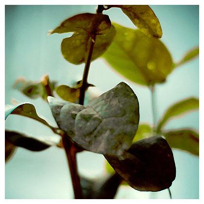 Le piante rispondono alle nostre emozioni