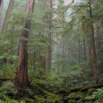 Gli alberi comunicano?