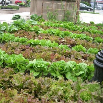 Orto aziendale: coltivare verdura e frutta con i colleghi