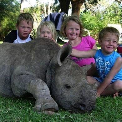 Jimmy, il rinoceronte adottato dagli umani