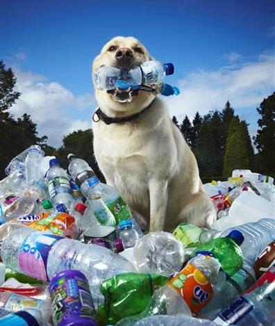 Il labrador che raccoglie la plastica dall'ambiente