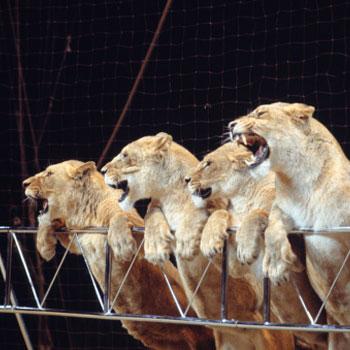 Regno Unito, animali selvaggi banditi nei circhi