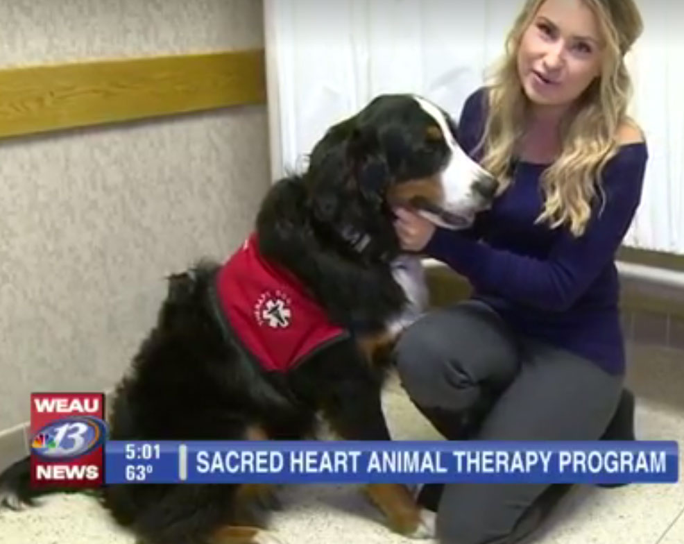 therapy-dog3