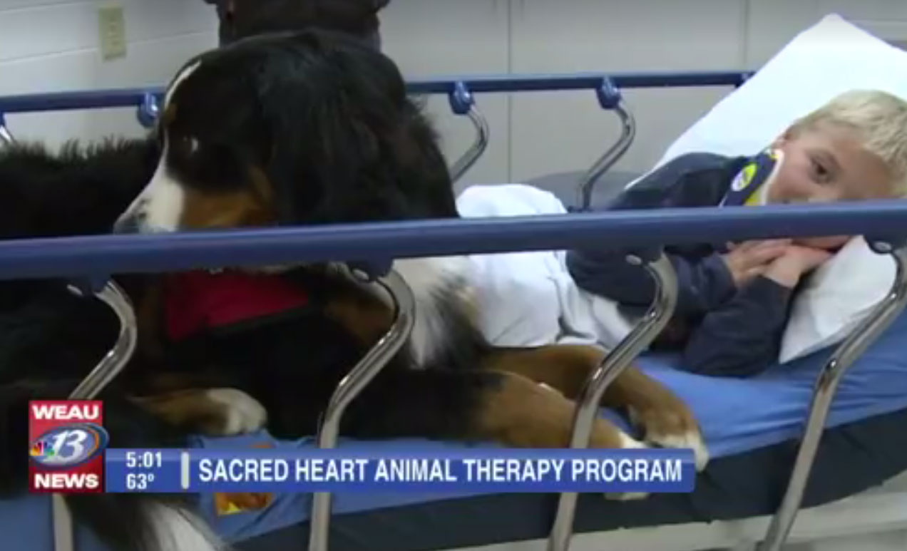 therapy-dog4