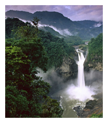 95. SALVIAMO LA FORESTA AMAZZONICA